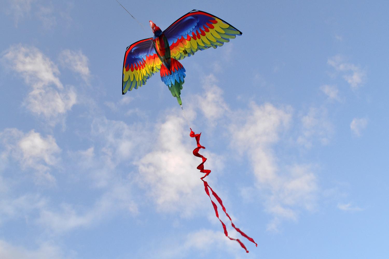 Птица Говорун 3D изображение 0