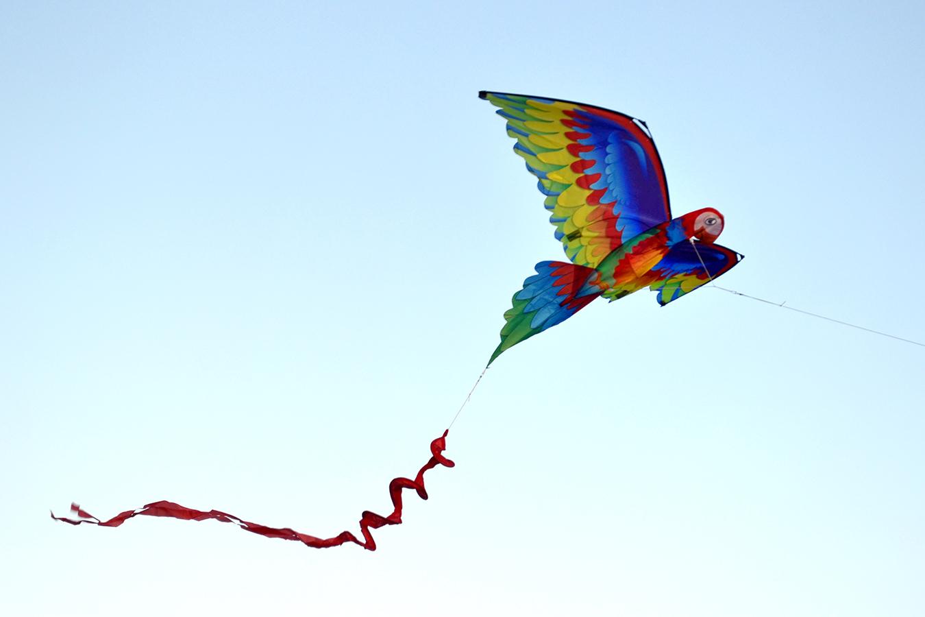 Птица Говорун 3D изображение 2