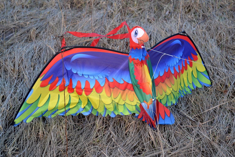 Птица Говорун 3D изображение 4