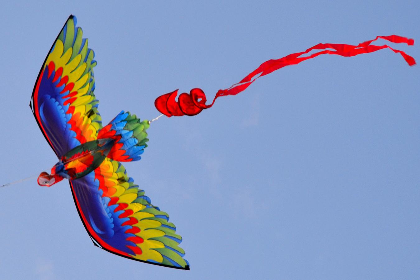 Птица Говорун 3D изображение 5