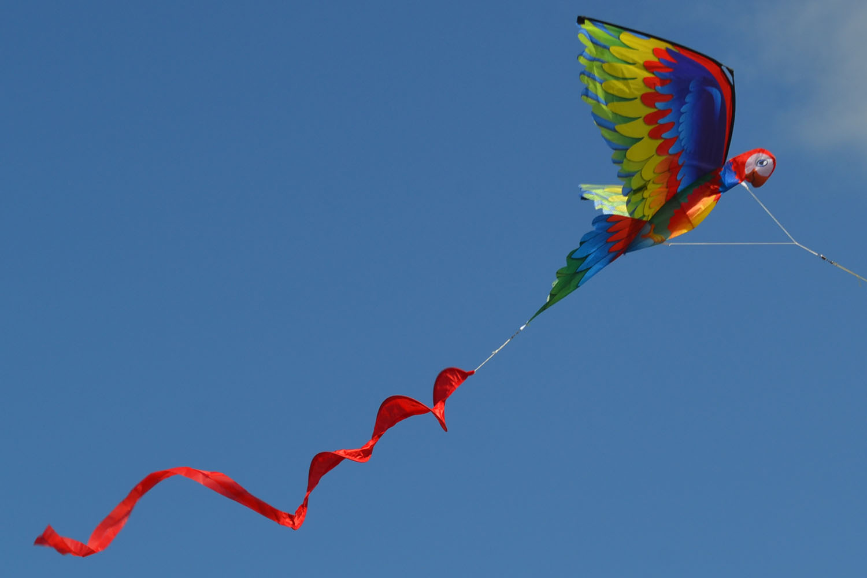 Птица Говорун 3D изображение 7