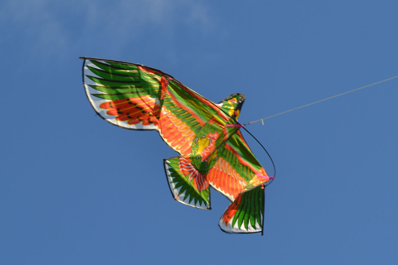Зеленый Какаду изображение 1
