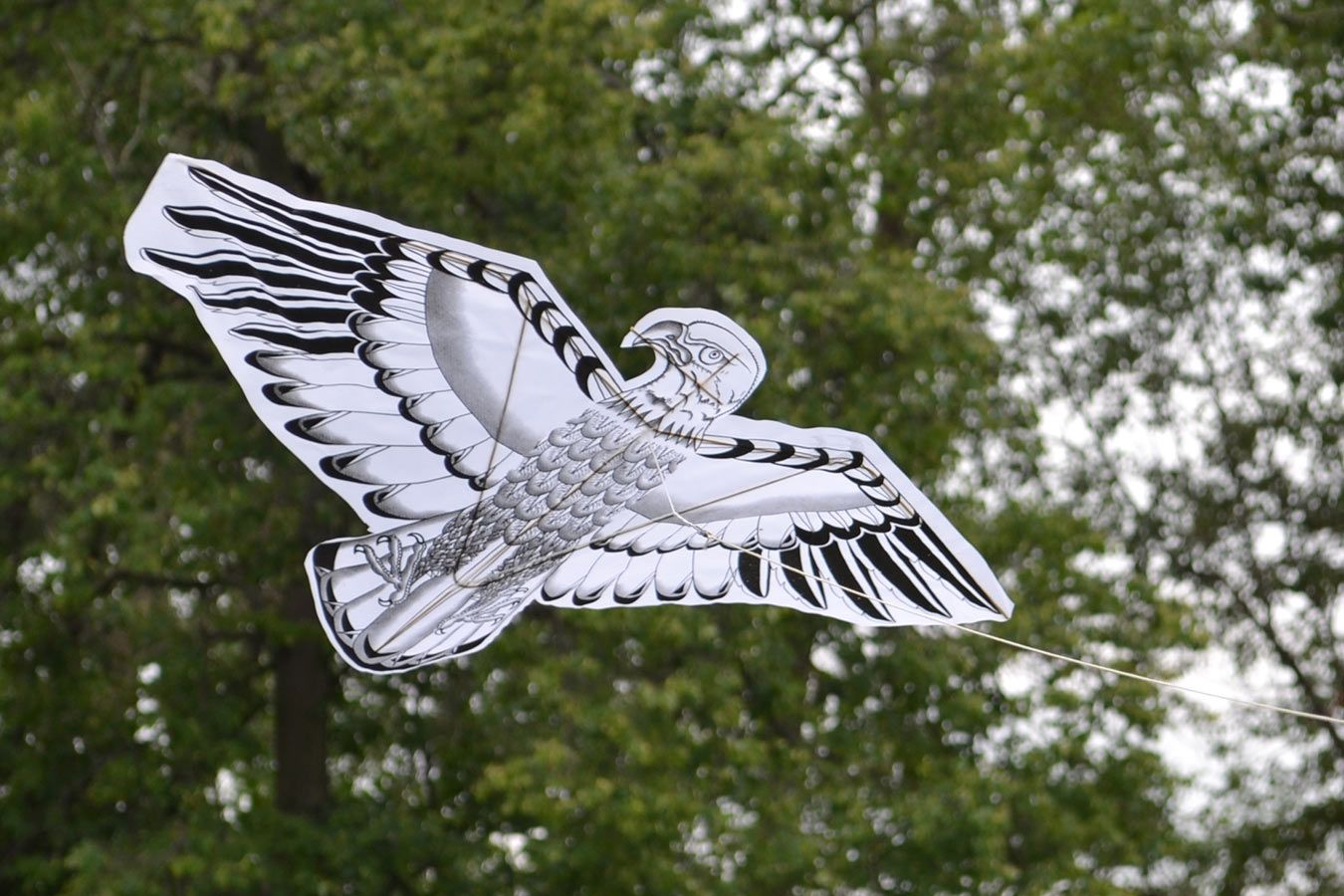 Орел изображение 1