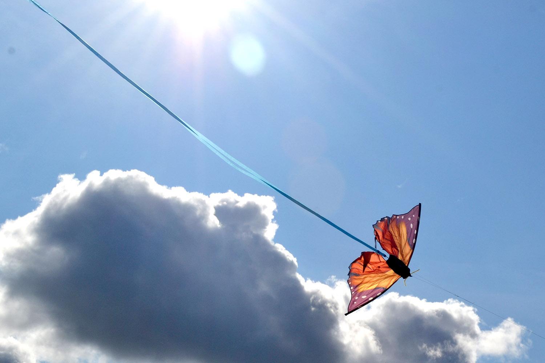 Бабочка Монарх изображение 2
