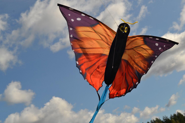 Бабочка Монарх изображение 3