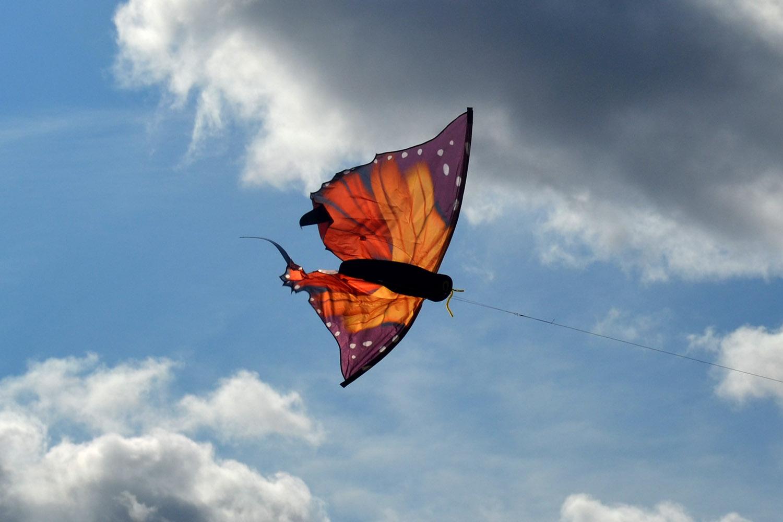 Бабочка Монарх изображение 4
