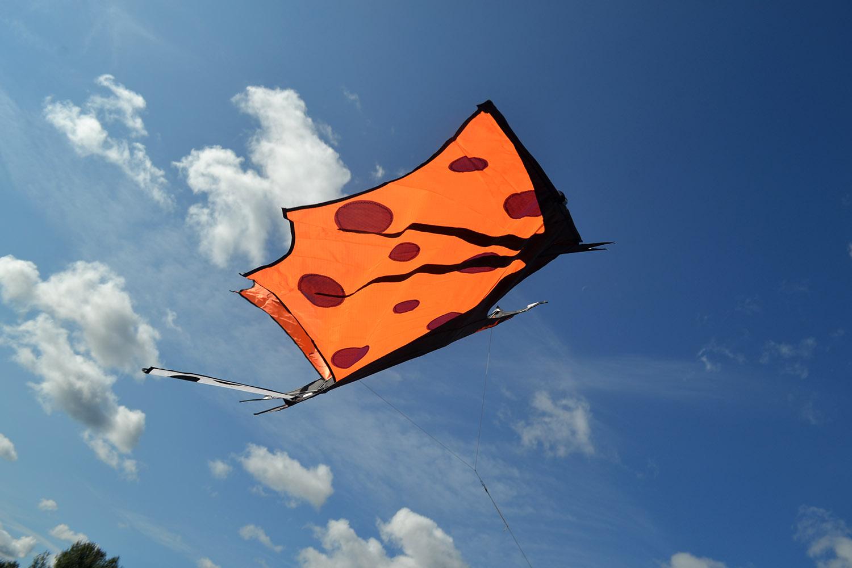 Оранжевый крылан изображение 1