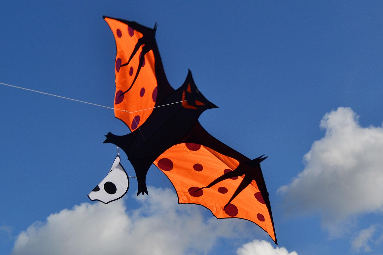 Оранжевый крылан изображение 2