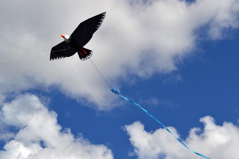 Белоголовый орлан изображение 0