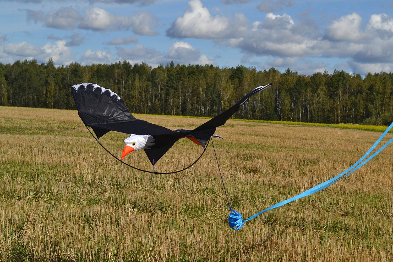 Белоголовый орлан изображение 1