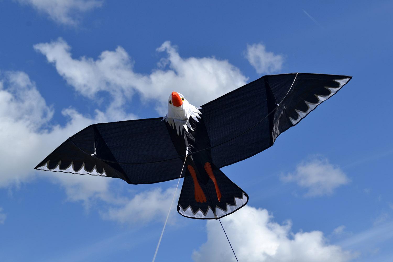 Белоголовый орлан изображение 2