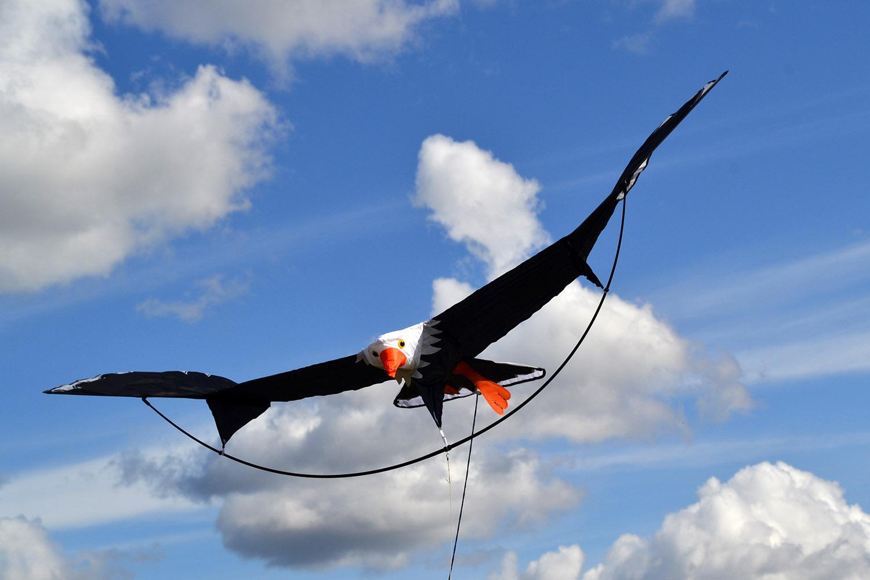 Белоголовый орлан изображение 4