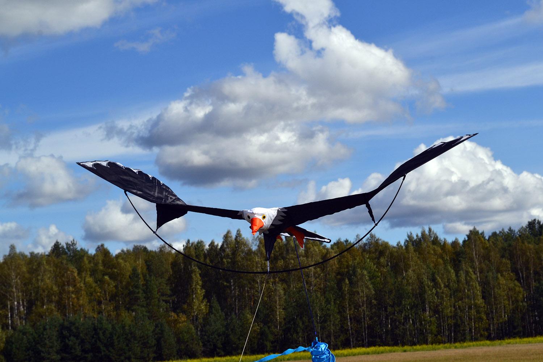 Белоголовый орлан изображение 5