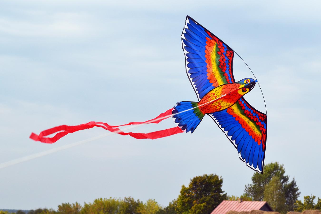 Попугай Розелла синий изображение 0