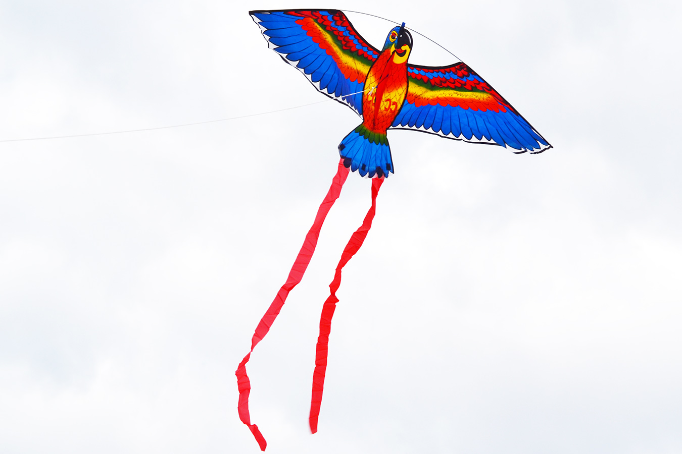 Попугай Розелла синий изображение 1