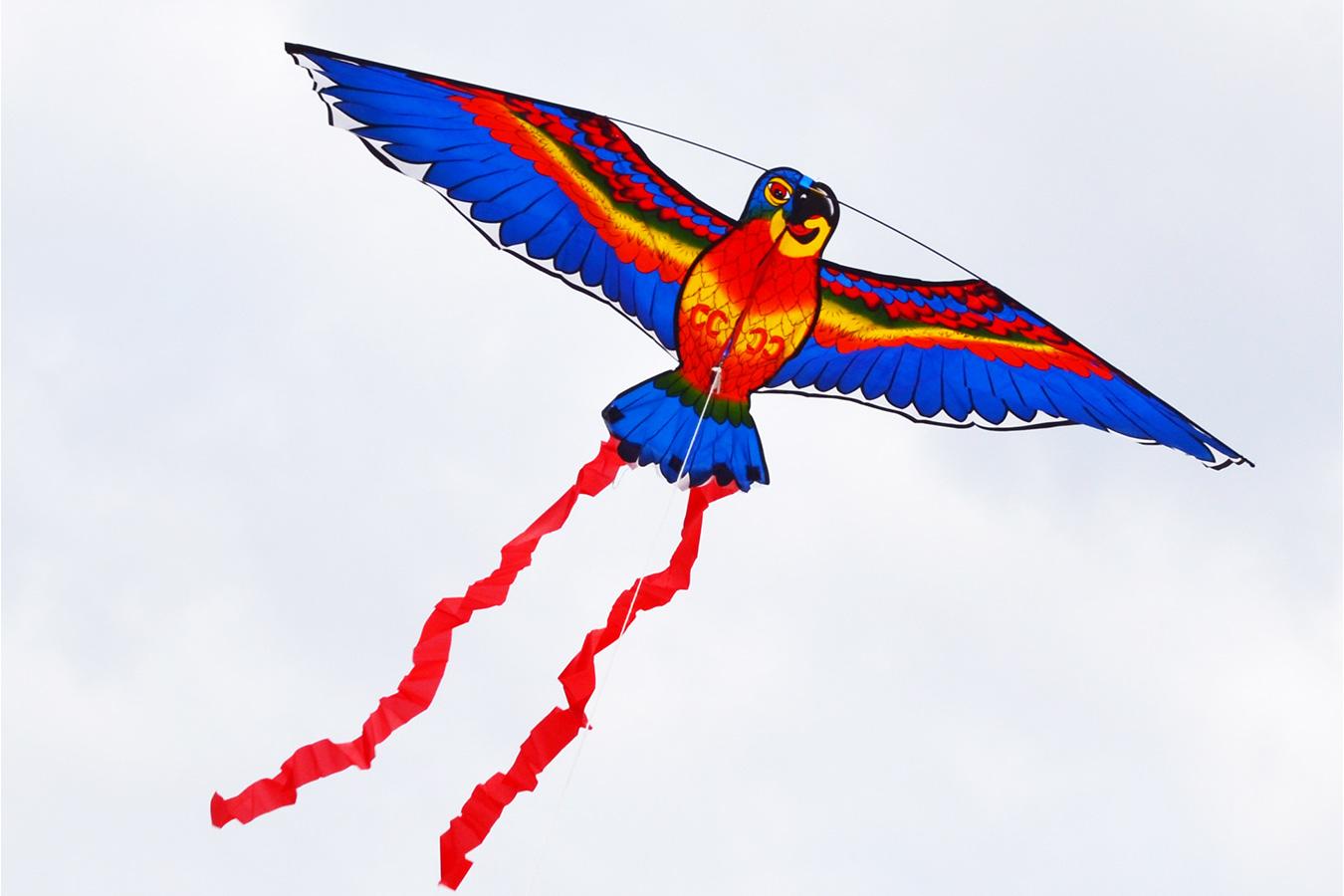 Попугай Розелла синий изображение 2