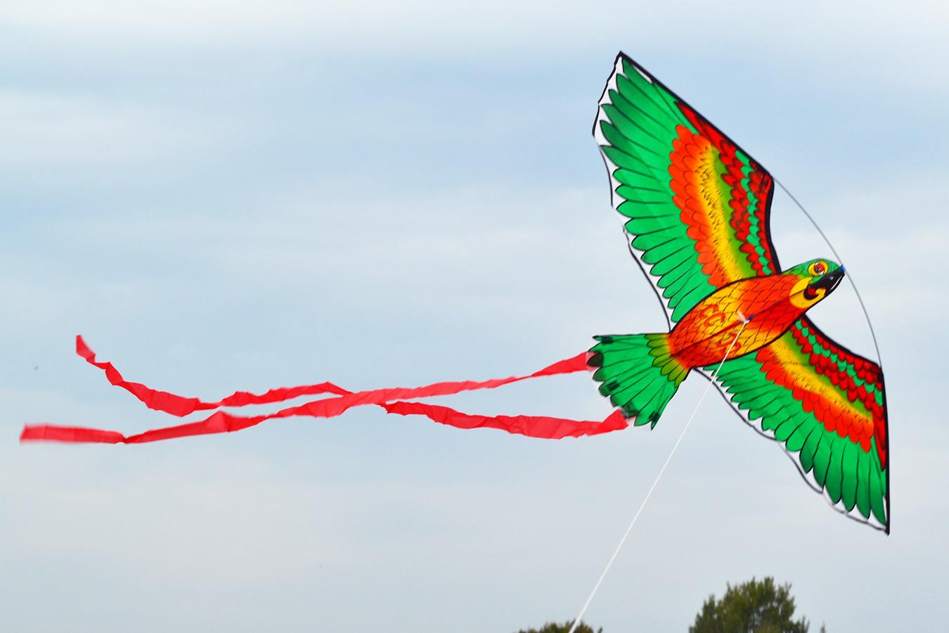 Попугай Розелла зеленый изображение 0