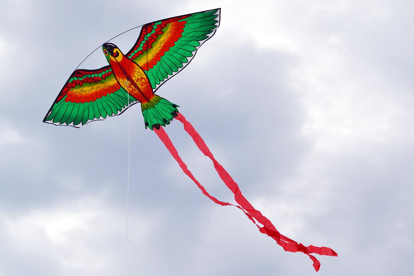 Попугай Розелла зеленый изображение 1