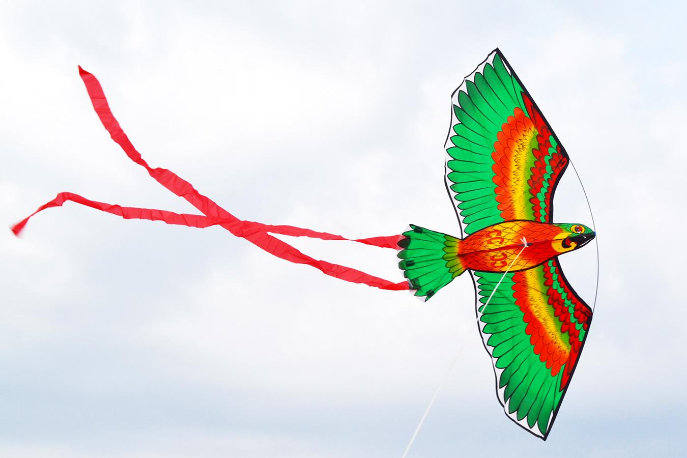 Попугай Розелла зеленый изображение 3