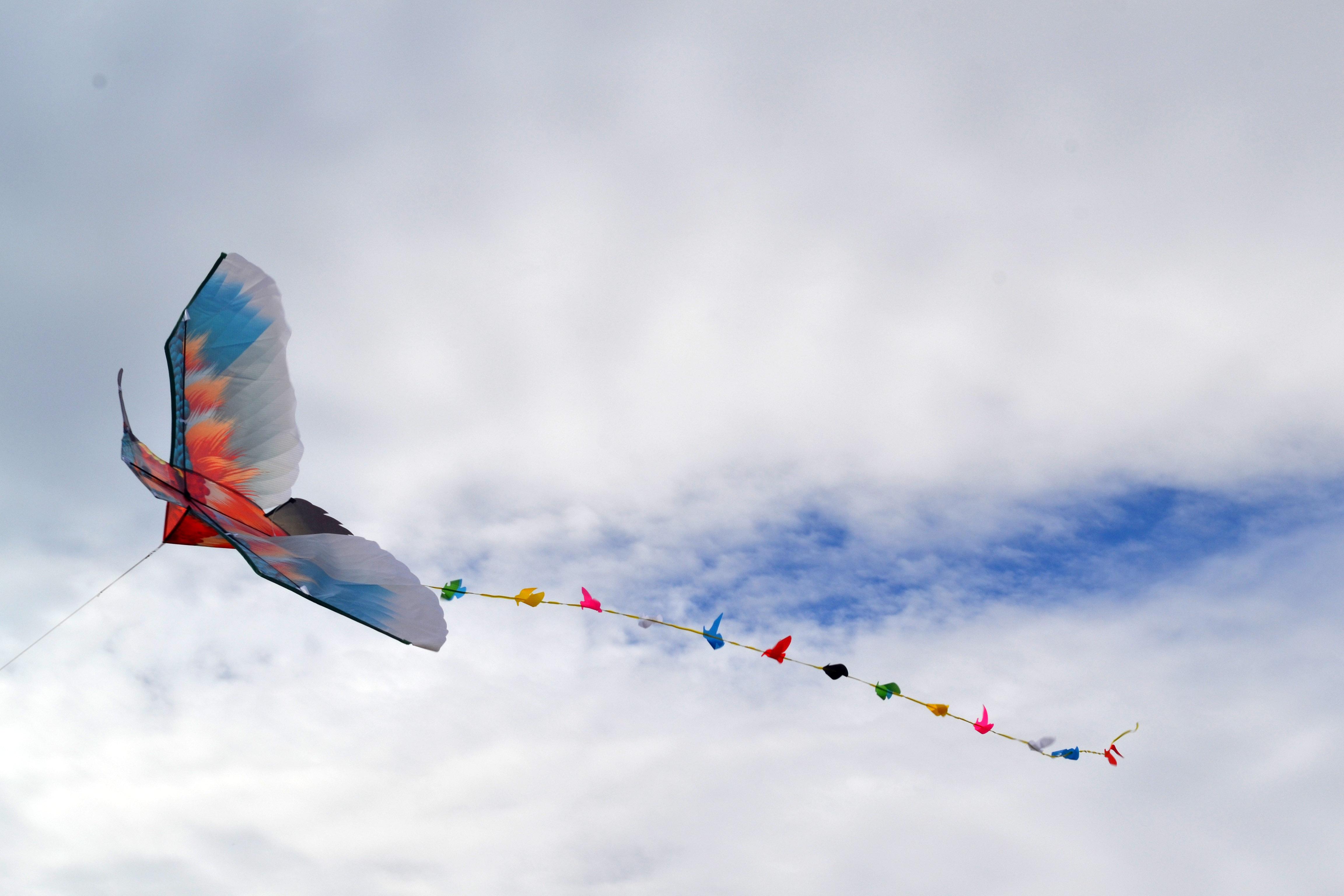 Колибри изображение 2