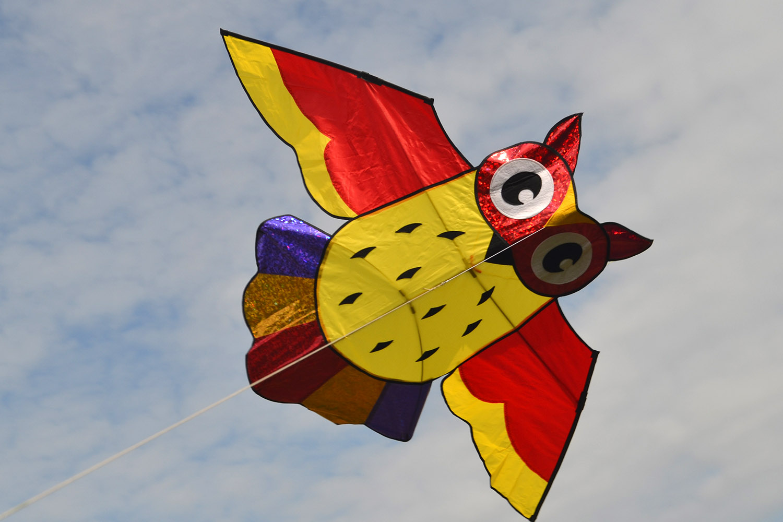 Ушастая сова изображение 1