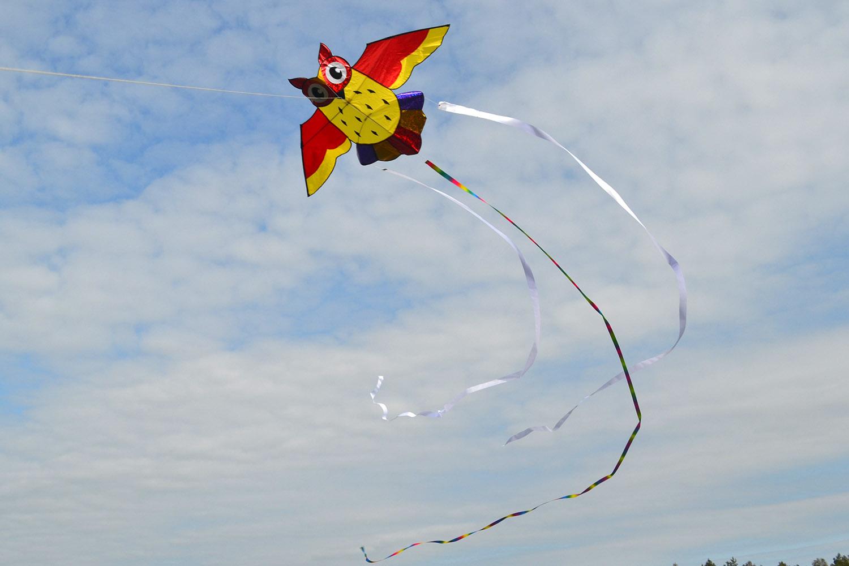 Ушастая сова изображение 3