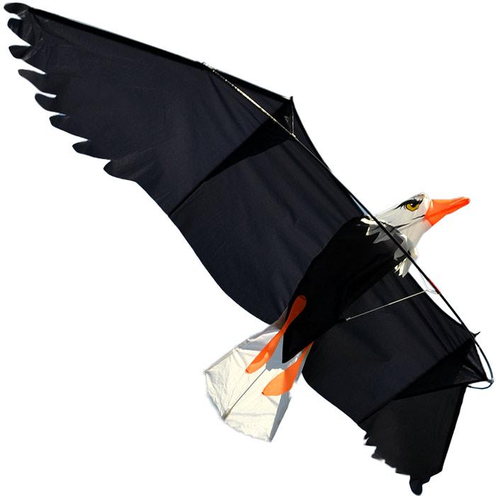 белоголовый орлан, воздушный змей [zbbe557]