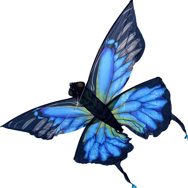 синяя пелеида, воздушный змей [zb716]